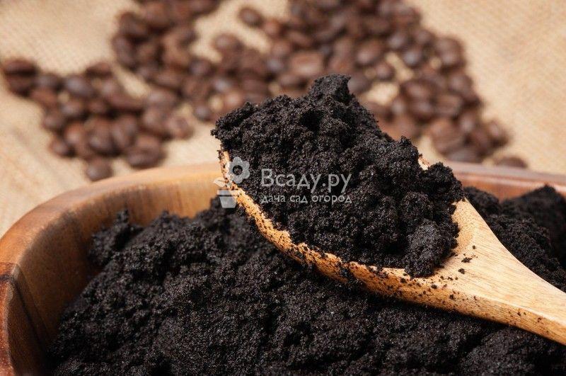кофейная гуща как удобрение для каких растений