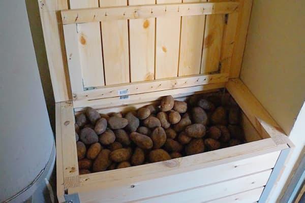 Хранение картофеля в овощехранилище: какие должны быть условия и температура, чтобы корнеплод не портился зимой, а также какие существуют методы? русский фермер