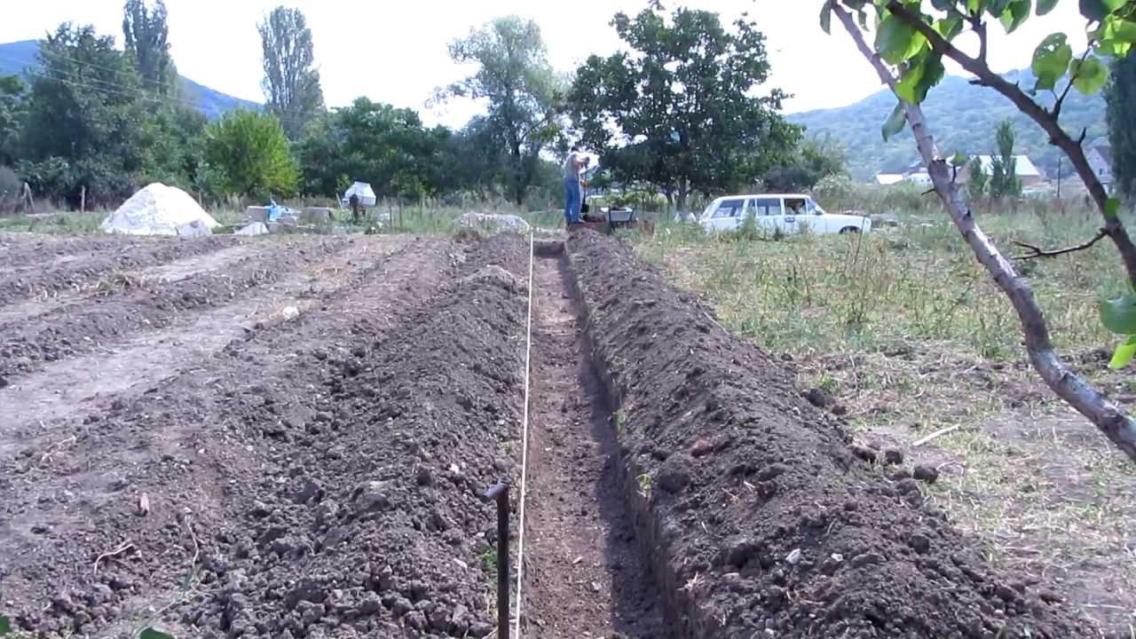Малина посадка и уход в открытом грунте: секреты урожайности