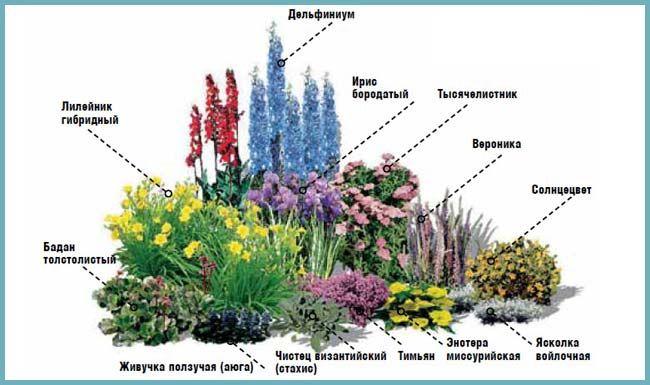 схемы цветников из многолетников с разбивочными чертежами