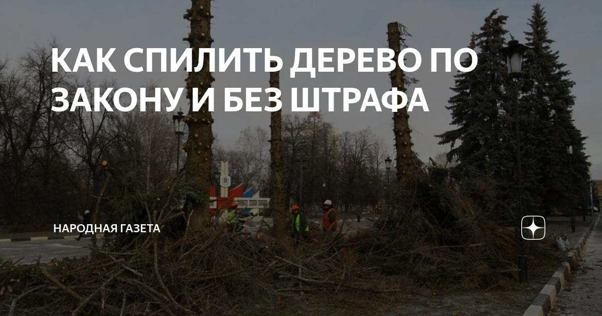 Законная вырубка деревьев на собственном участке и необходимость получения разрешения на вырубку