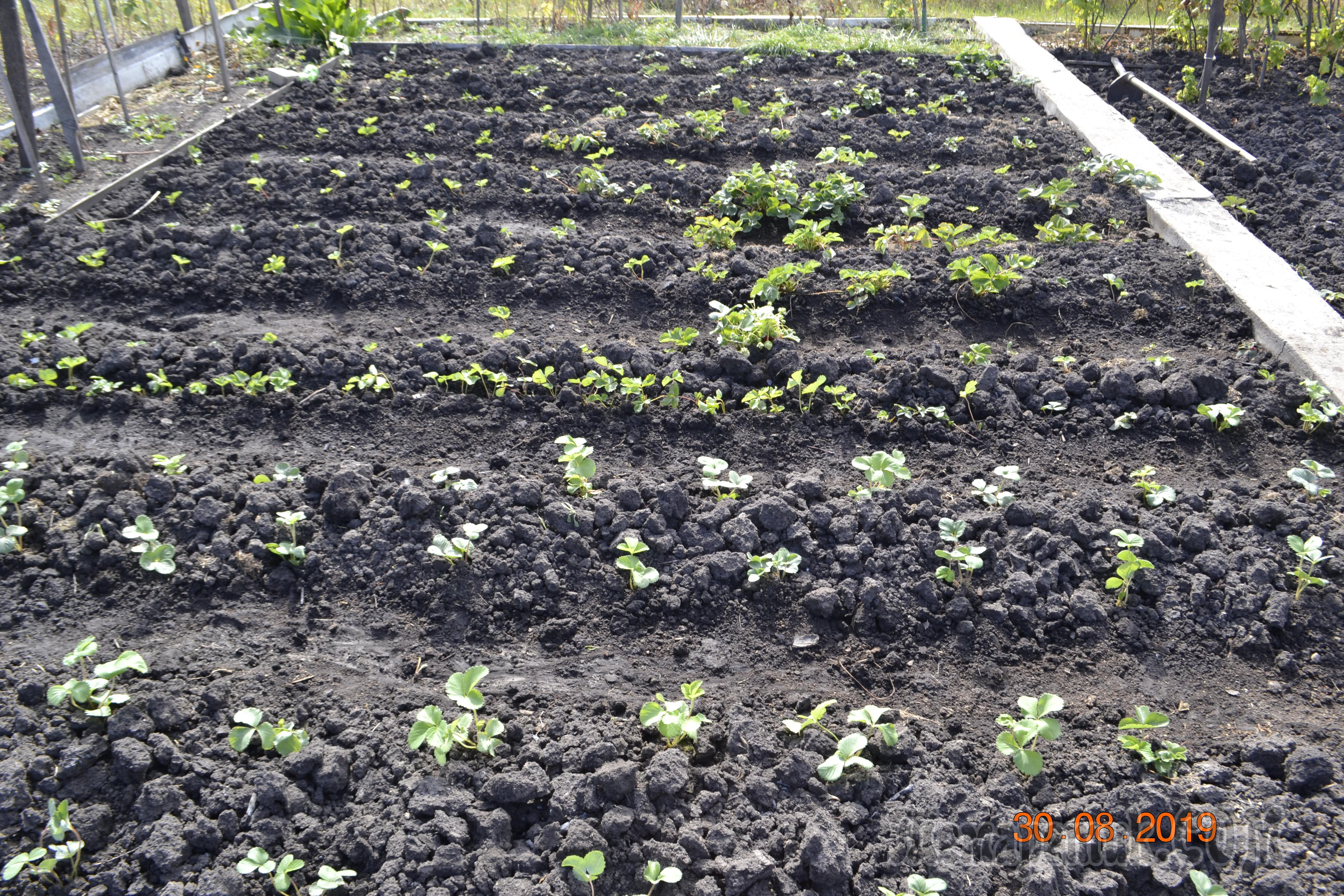 Органическое земледелие на даче с нуля - видео. с чего начать природное земледелие и устройство умных грядок