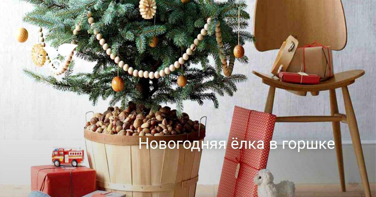 Карликовая ель (24 фото): выбираем маленькие сорта голубой ели для сада, морозостойкие низкорослые канадские ели и декоративные сербские