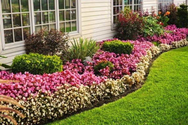 Почвопокровные растения и цветы для сада: их названия, фото и описания