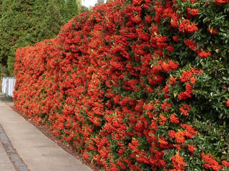 Бордюрные цветы: сорта низкорослых многолетних растений, создание цветочных бордюров из них, правила ухода