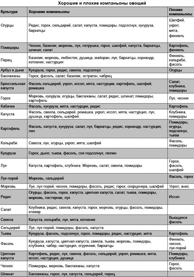 Совместимость растений в саду и огороде таблица | комнатные цветы