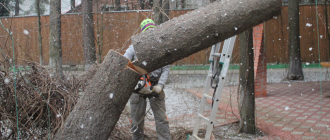 можно ли вырубать деревья на собственном участке