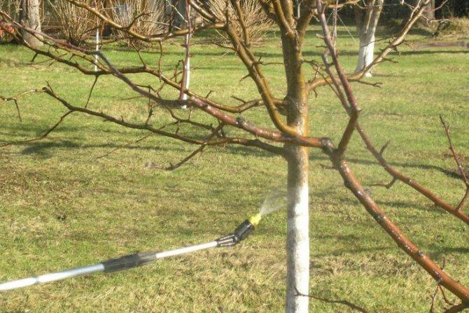 чем обработать деревья и кустарники осенью