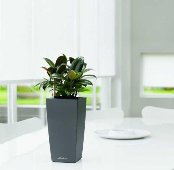 Горшки для цветов: большие, напольные, керамические для офисных и домашних растений своими руками