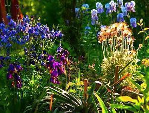 Схемы и идеи создания клумбы из многолетников непрерывного цветения