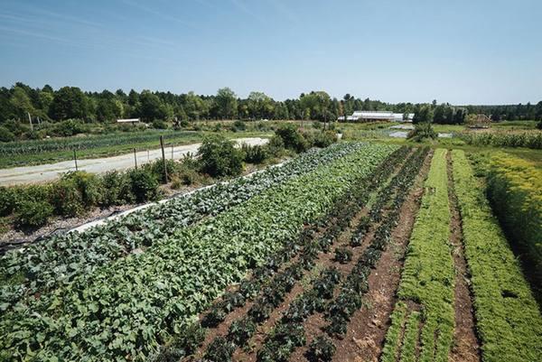 Органическое земледелие, с чего начать?