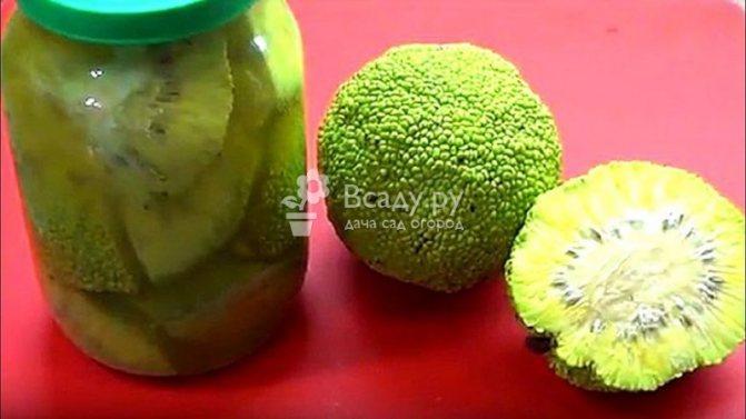 Адамово яблоко лечебные свойства и применение, рецепты приготовления