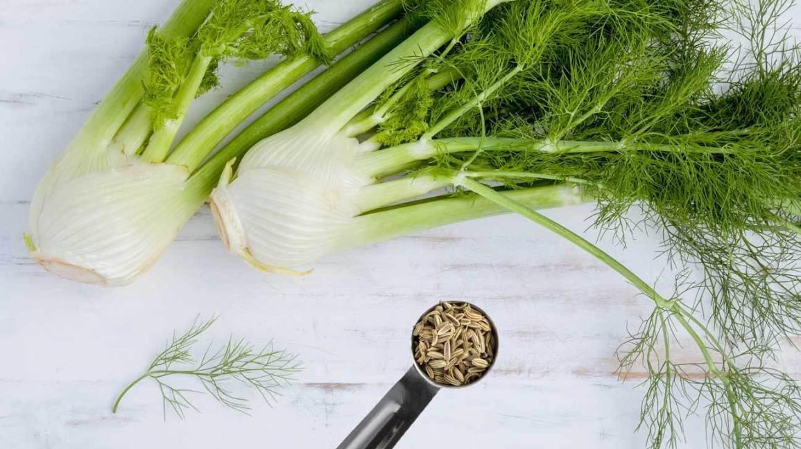 Полезные свойства фенхеля обыкновенного для пищеварения и бронхов