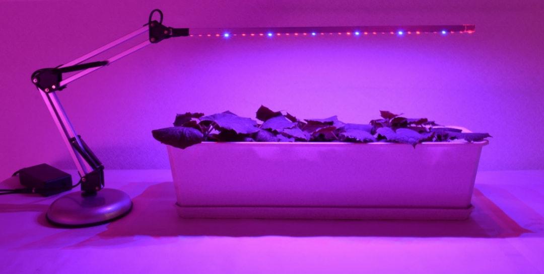 Как правильно выбрать светодиодную ленту для растений (фитолента)