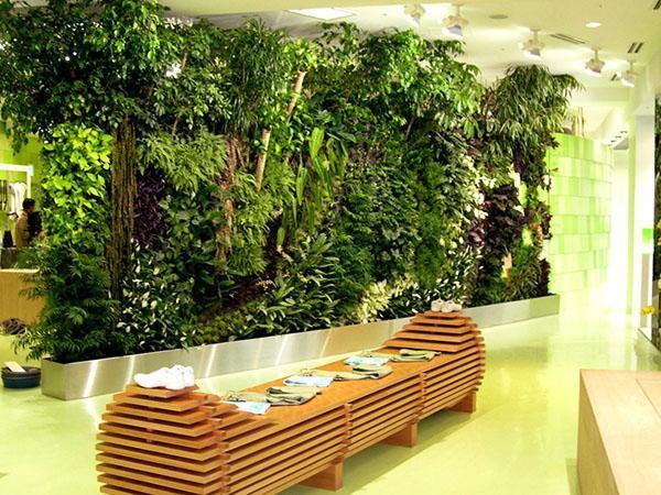 Великая зелёная стена — википедия. что такое великая зелёная стена