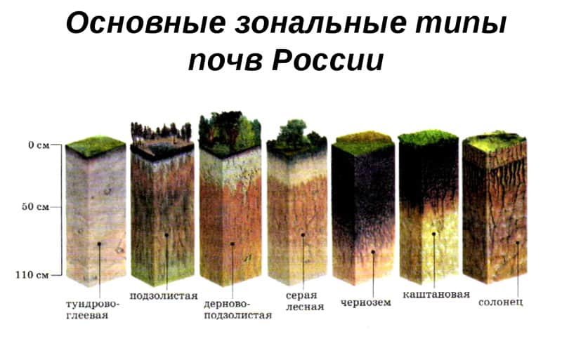 каков состав почвы