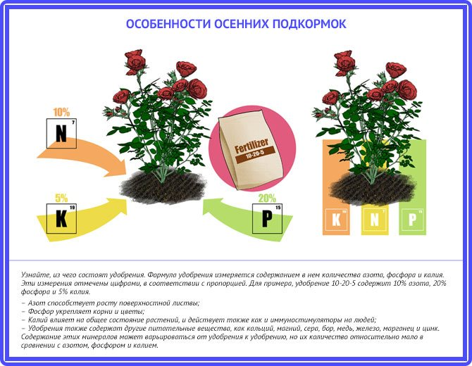 Обработка роз осенью железным купоросом: пропорции и концентрация состава для опрыскивания. как обработать перед укрытием на зиму?