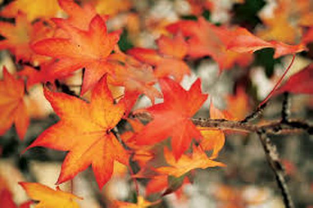 Оформление в детском саду осень. шаблоны осенних листьев. трафареты осенние, цветные, объемные, на окно в детском саду