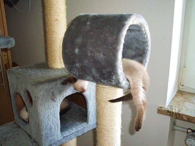 сделать домик для кошки