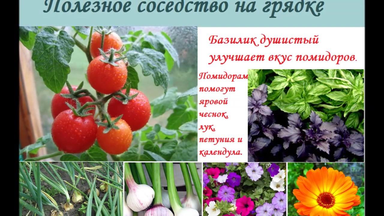 Смешанные посадки: таблица совместимости растений