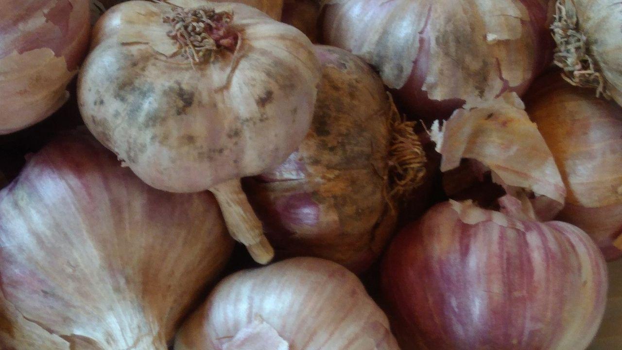 Выращивание озимого чеснока в открытом грунте: посадка, уход, подкормка, болезни