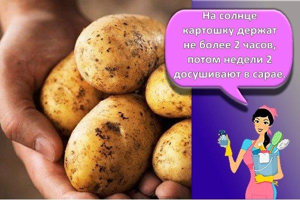 Создаем правильные условия для хранения картофеля в погребе