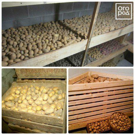 как хранить картофель в погребе