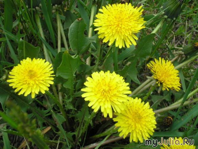 Садовые хитрости: советы и рекомендации дачников и опытных садоводов