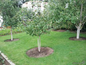 Какие деревья можно сажать возле дома? приметы о растениях на участке