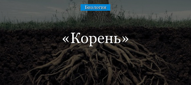 части корня растения