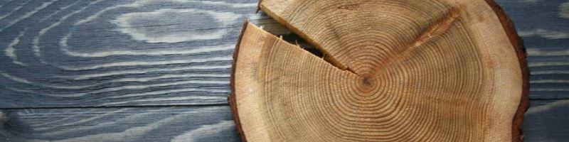 Дерево липа: мелколистная (tilia cordata) и другие виды