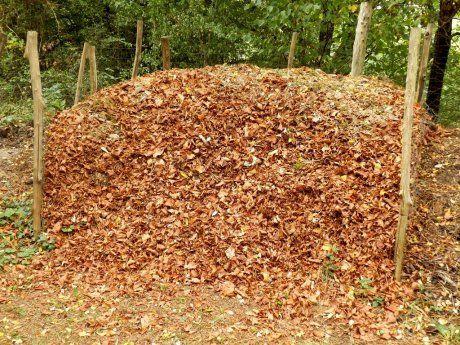 уборка листвы в осенний период