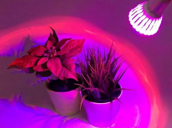 Как выбрать лампы для растений? какие фитолампы подойдут для комнатных цветов? тонкости выбора мощной лампы для орхидей и других растений. рейтинг лучших моделей