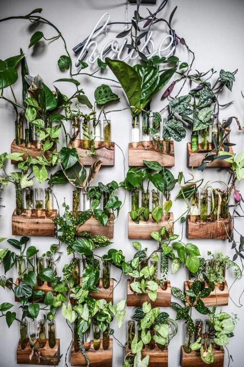 Вьющиеся растения для сада, дачи: лучшие многолетние, однолетние, фото