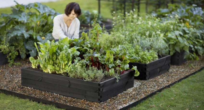 Какая должна быть ширина грядки в огороде
