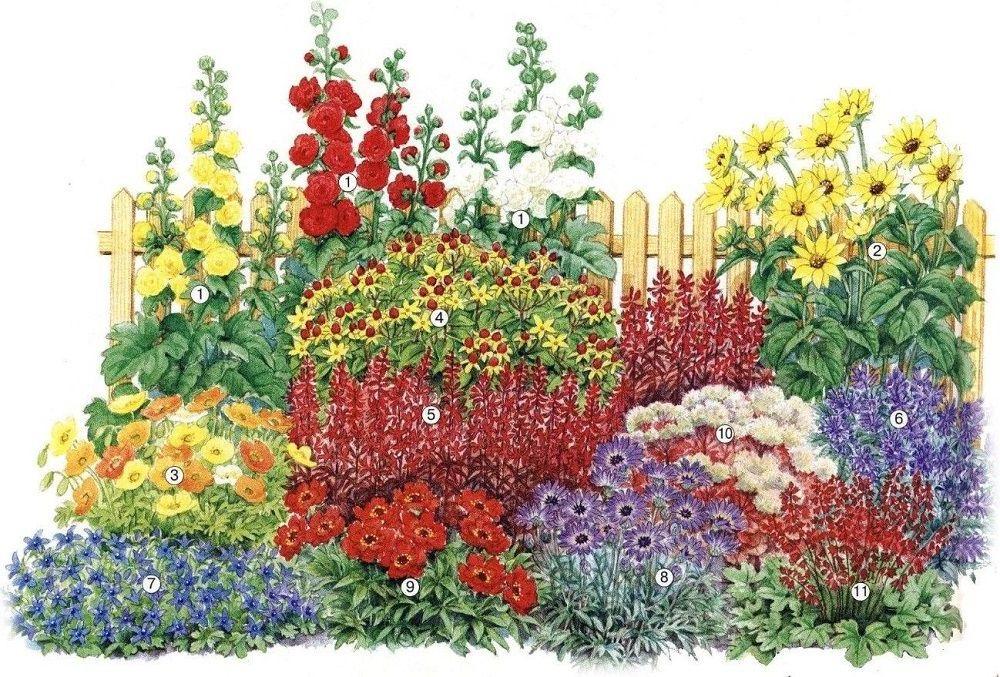 Схемы красивых клумб непрерывного цветения из многолетников