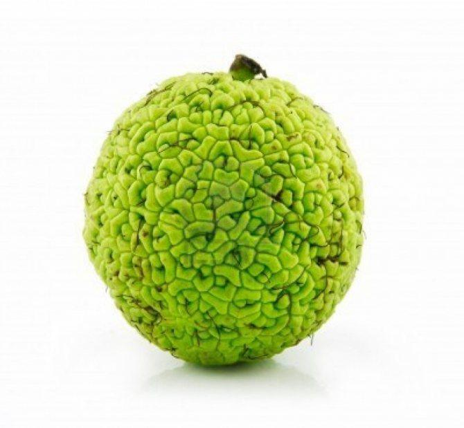 Что лечит адамово яблоко, насколько эффективны его лечебные свойства и как приготовить средства на его основе