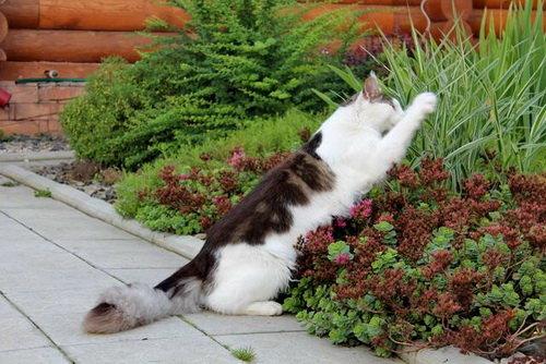 Кошка гадит на грядках (что делать) 7 народных средств
