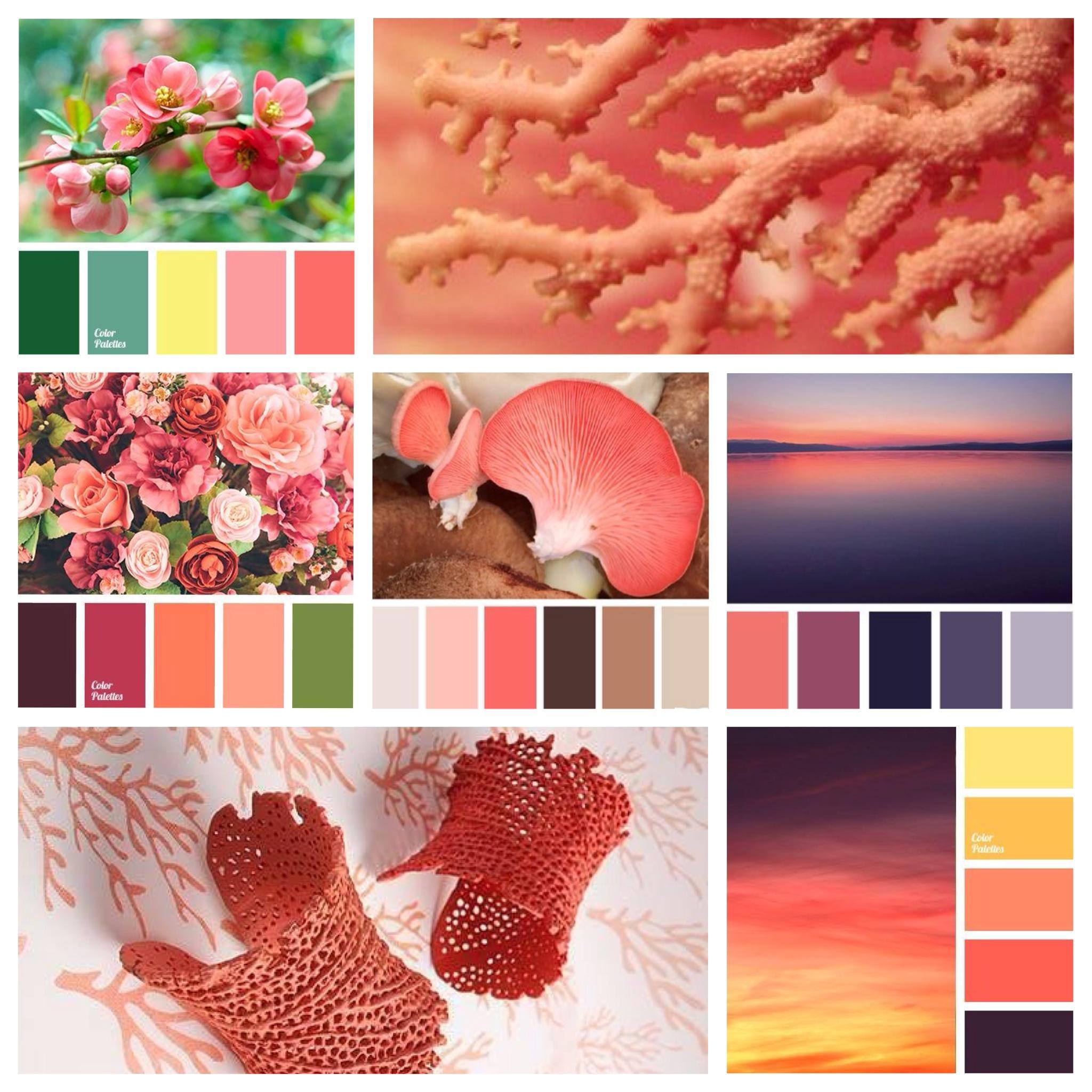 кораллово красный цвет