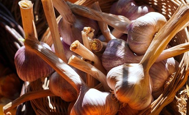 Как сажать чеснок под зиму и чтобы был крупный, на какую глубину (фото, видео) – zelenj.ru – все про садоводство, земледелие, фермерство и птицеводство