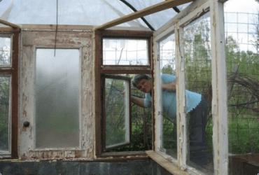 Своими руками: как построить теплицу из оконных рам