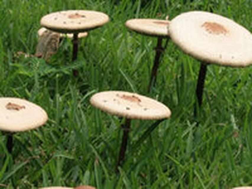 Как защитить газон от появления грибов - советы и рекомендации
