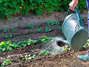 что можно посадить в огороде