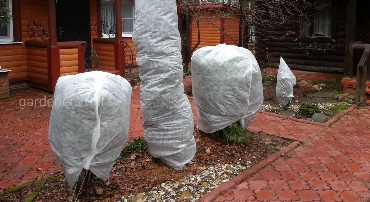 когда укрывать растения на зиму