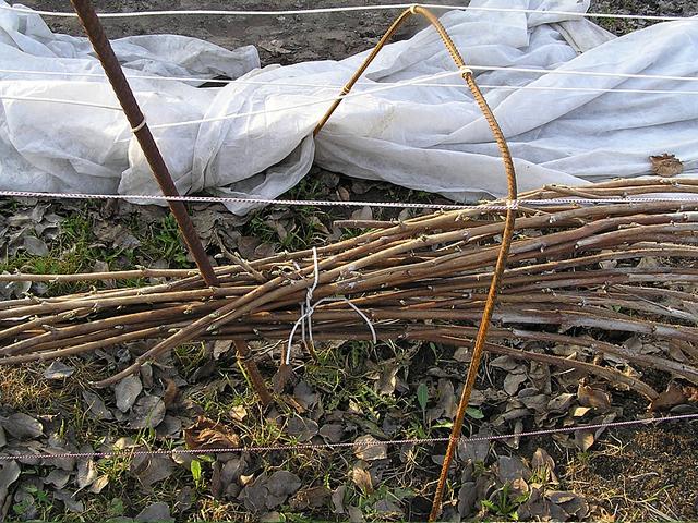 Как подготовить малину к зиме – руководство для огородников