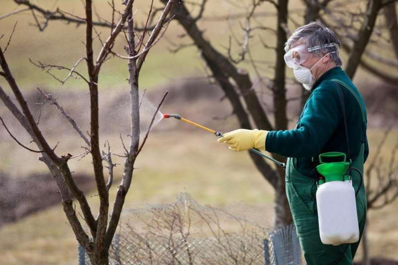 Обработка яблонь ранней весной от вредителей и болезней, чем обрабатывать и как опрыскивать, чем обработать до распускания почек