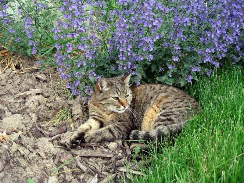 Как избавиться от соседских или бездомных котов, отвадить от своего участка, лестничной площадки, чем можно отпугнуть