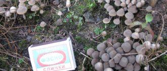 Как уничтожить грибы?