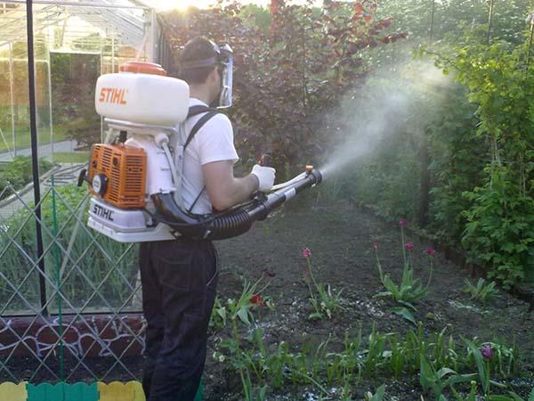 Борьба с болезнями сада: план осенних обработок