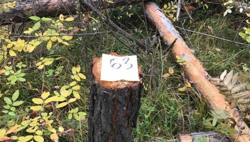 Как спилить дерево, не нарушая закон
